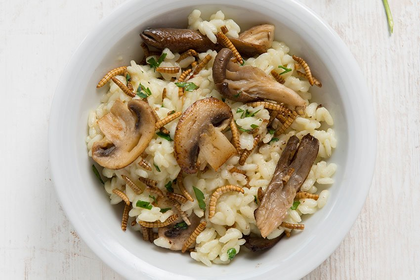 mealworm risotto