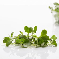 Fresh Micro Broccoli Microgreens 30g
