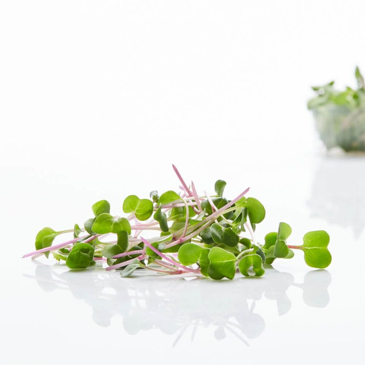 Fresh Micro Daikon Radish Microgreens 30g