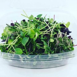 Fresh Pea Shoots, Daikon Radish & Micro Broccoli Nutrient Microgreens Mix 80g