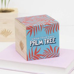 Grow Your Own Palm Tree Gift Kit