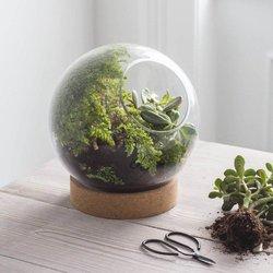 Small Cork-Based Glass Tabletop Terrarium