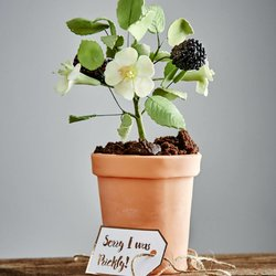 Edible Prickly Bramble Artisan Cake Gift With Vanilla Sponge and Chocolate Flower Pot