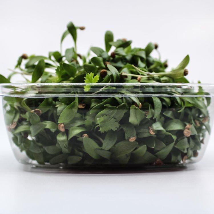 Fresh Micro Coriander Microgreens 30g