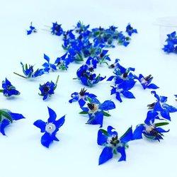 Edible Blue Borage Flowers 10-12 Pieces