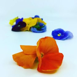 Edible Mixed Colour Pansy Flowers 8-12 Pieces