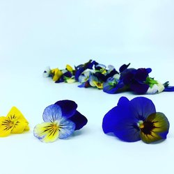 Edible Mixed Colour Viola Flowers 10-15 Pieces