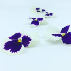 Edible White & Purple Pansy Flowers 8-12 Pieces