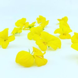 Edible Yellow Viola Flowers 8-12 Pieces
