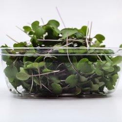 Fresh Micro Kohlrabi Microgreens 30g
