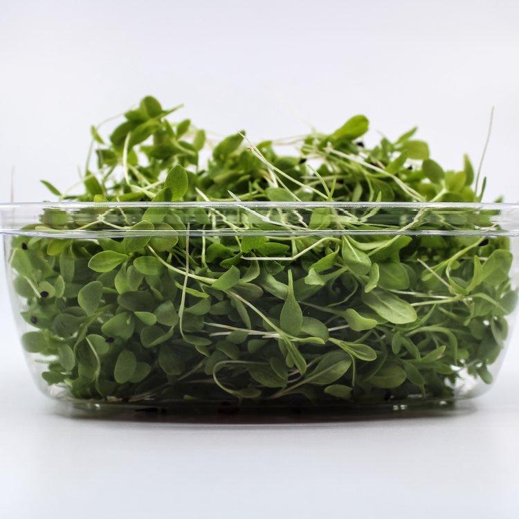 Fresh Micro Lemon Sorrel Microgreens 30g