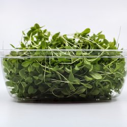 Fresh Micro Lemon Sorrel Microgreens 30g