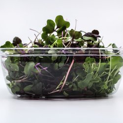 Fresh Microgreens Mix Inc. Micro Cabbage, Kohlrabi, Broccoli, Mizuna & Beet 30g