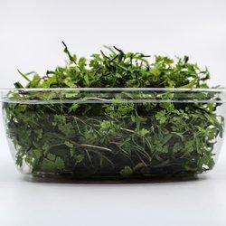 Fresh Micro Chervil Microgreens 25g