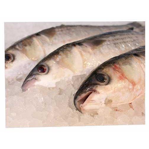 Fresh Filleted Fish Box