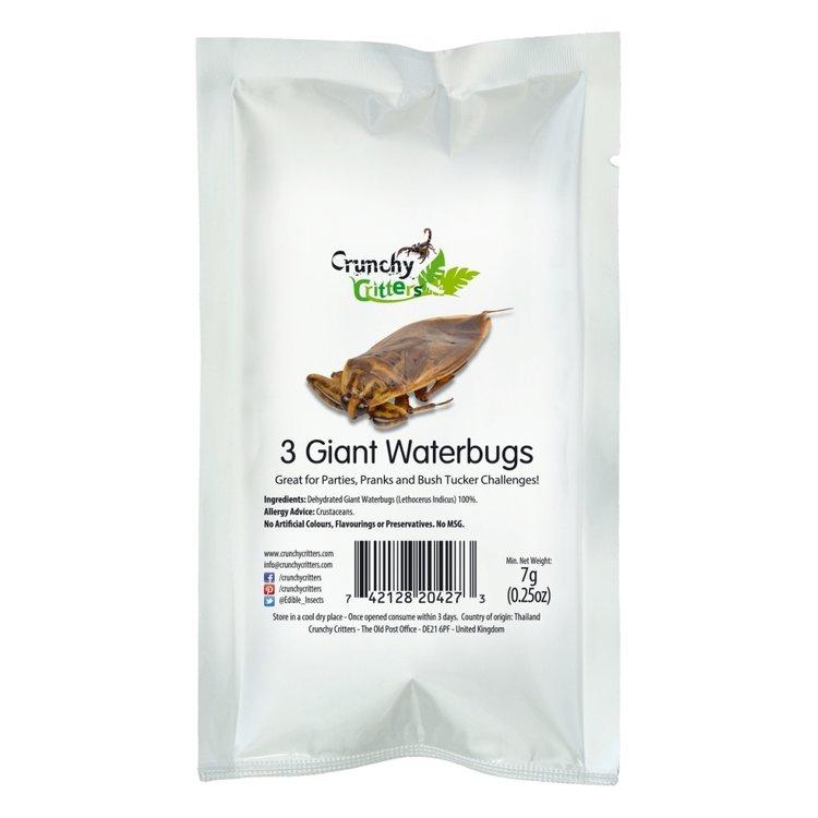 3 Edible Giant Water Bugs 7g