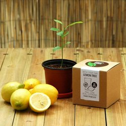 Grow Your Own Lemon Tree Gift Kit
