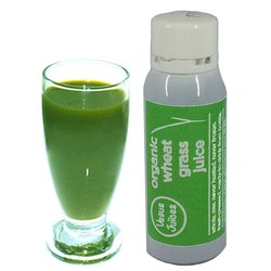 7 x 40ml Organic Wheatgrass Shots by Vegus Foods - Wheatgrass Juice