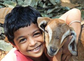 Fundraising Ideas - Animal-show