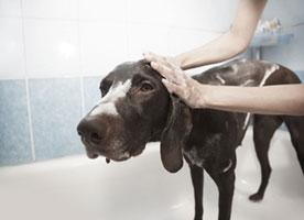 Fundraising Ideas - Dog-Wash