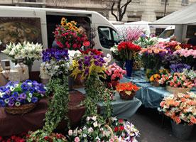 Fundraising Ideas - Plant-Sale