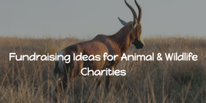 Fundraising Ideas for Animal & Wildlife Charities