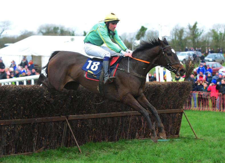 TATTS IRE CHELT FEB SALE PREVIEW: Some smart young jumpers on offer