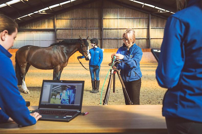 HORSE SENSE: Endless equine options at Enniskillen