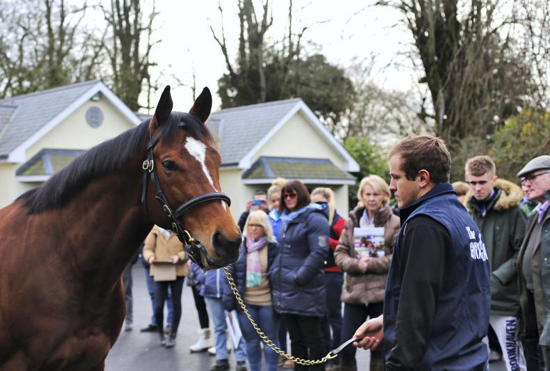 BREEDING INSIGHTS: Monarch and Chief are first-season sire aristocracy