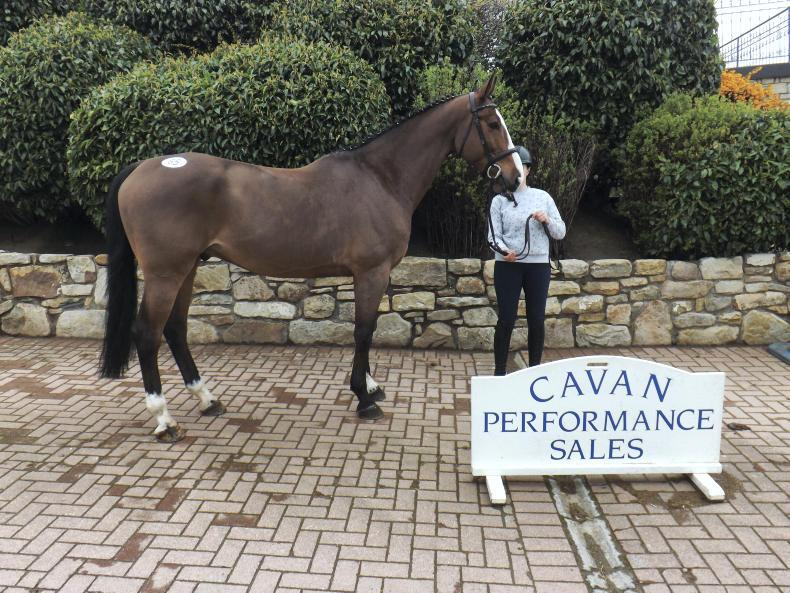 CAVAN SALES PREVIEW:  Strong range of horses, ponies and youngsters offered
