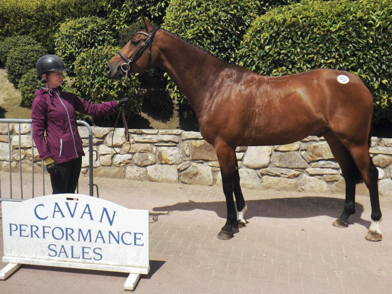 MULLINGAR SALES PREVIEW:  Nice selection of horses and ponies