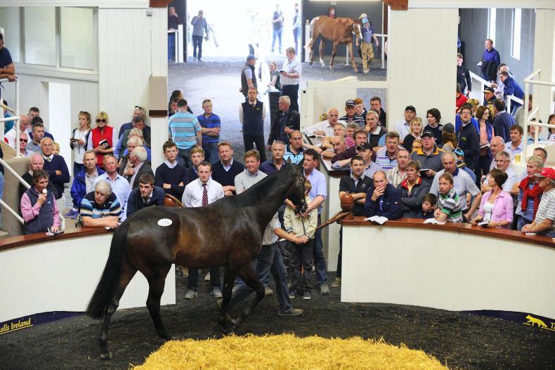 Horse management - The Irish Field