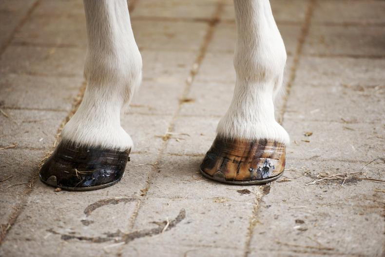 HOOF CARE FEATURE 2019: Penetrating hoof injuries