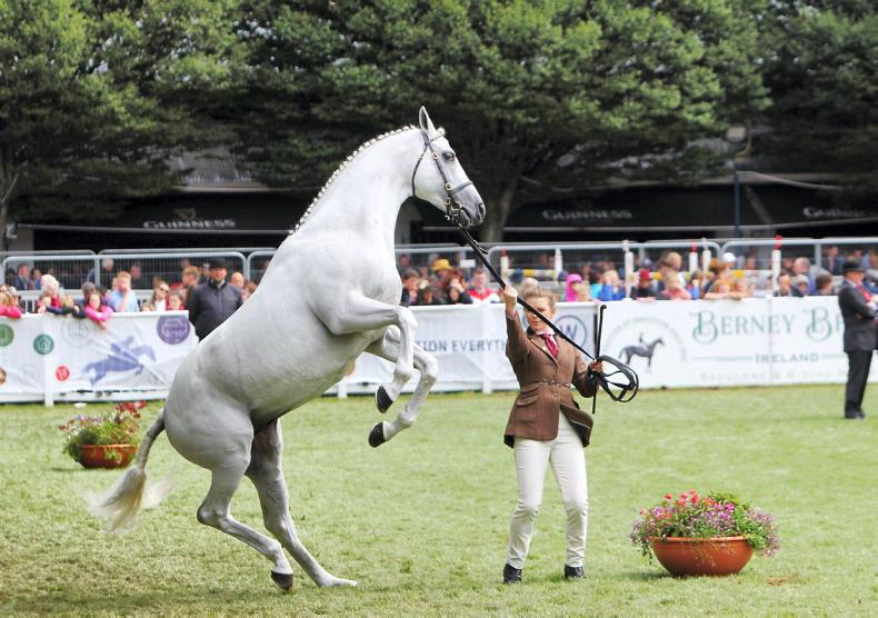 DUBLIN HORSE SHOW PICTURE DESK:  Out and About