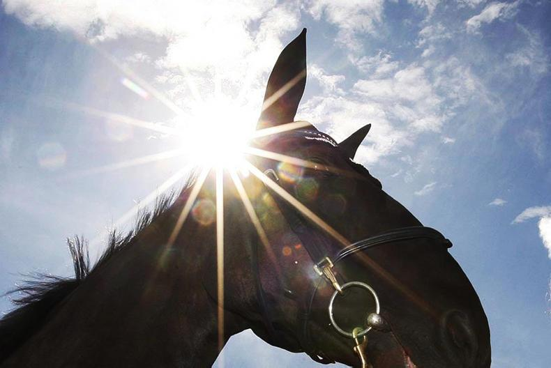HORSE SENSE: Wide range of service available at the IEC