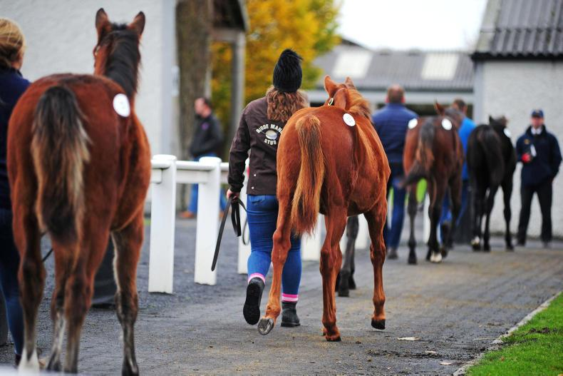 HORSE SENSE: Foal sale preparation must start early