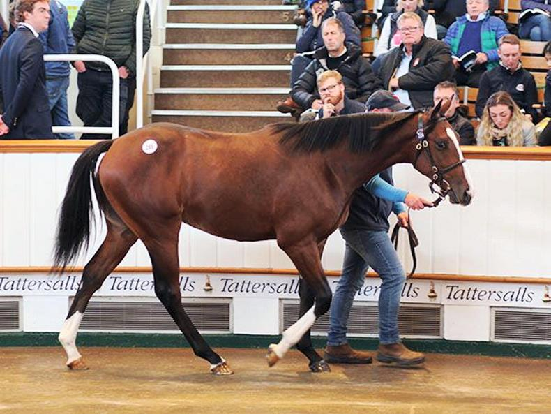 TATTERSALLS OCTOBER YEARLING SALE BOOK 1: Norelands strikes gold twice