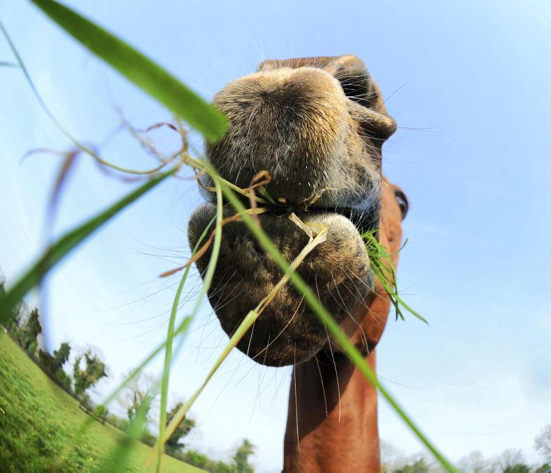 HORSE SENSE: Key to laminitis control is weight management