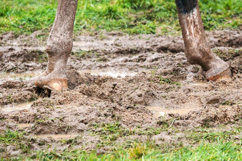 HORSE SENSE: Horse power brings energy to Helsinki