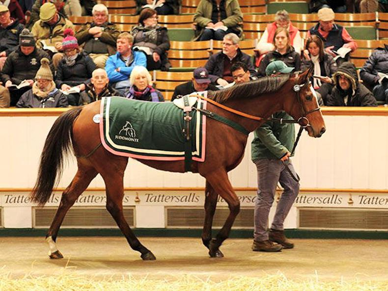 SALES: Farhh colt the six-figure star on final day of Tattersalls Foal Sale