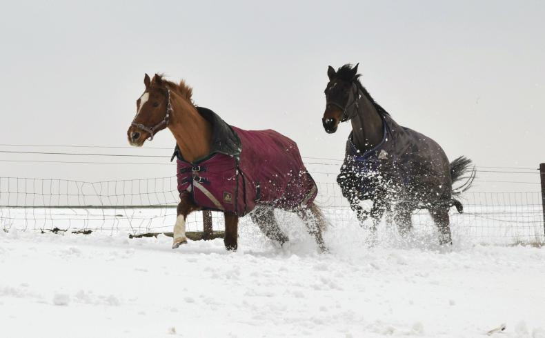 HORSE SENSE: Reliable service with Carbury Compost