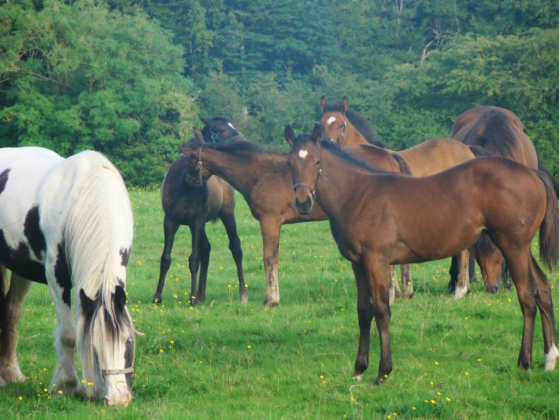 HORSE SENSE: Foster mare and orphan foal alert service