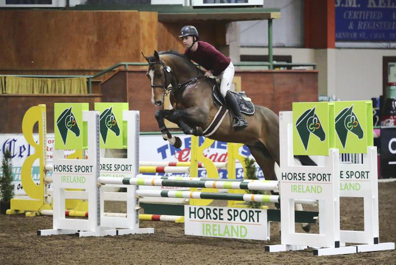 HSI STALLION INSPECTIONS: Impressions from Cavan