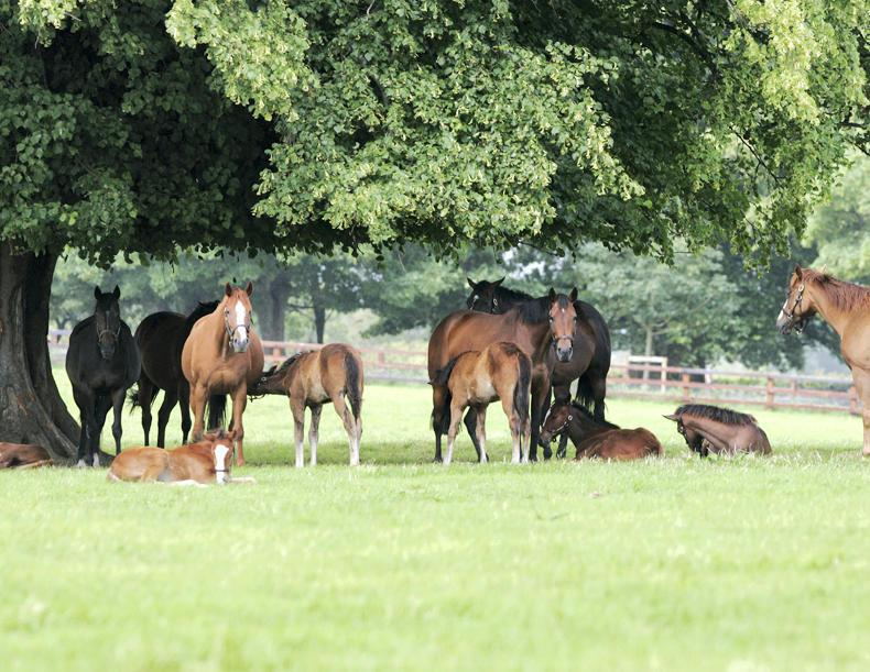HORSE SENSE: ITBA is here to help breeders