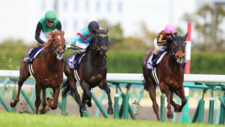 BREEDING INSIGHTS: Dramatic first Group 1 for Moku Superflare
