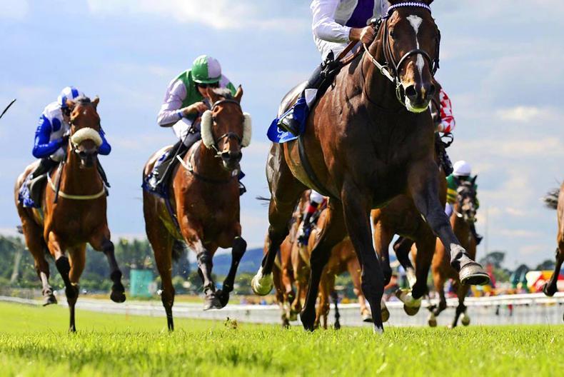 Virtual tour of new racehorse care course