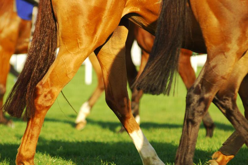 Surveillance programme launched to help UK racing track coronavirus cases