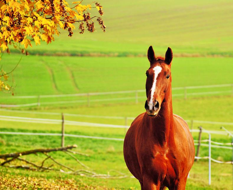 HORSE SENSE: Building your horse up after lockdown