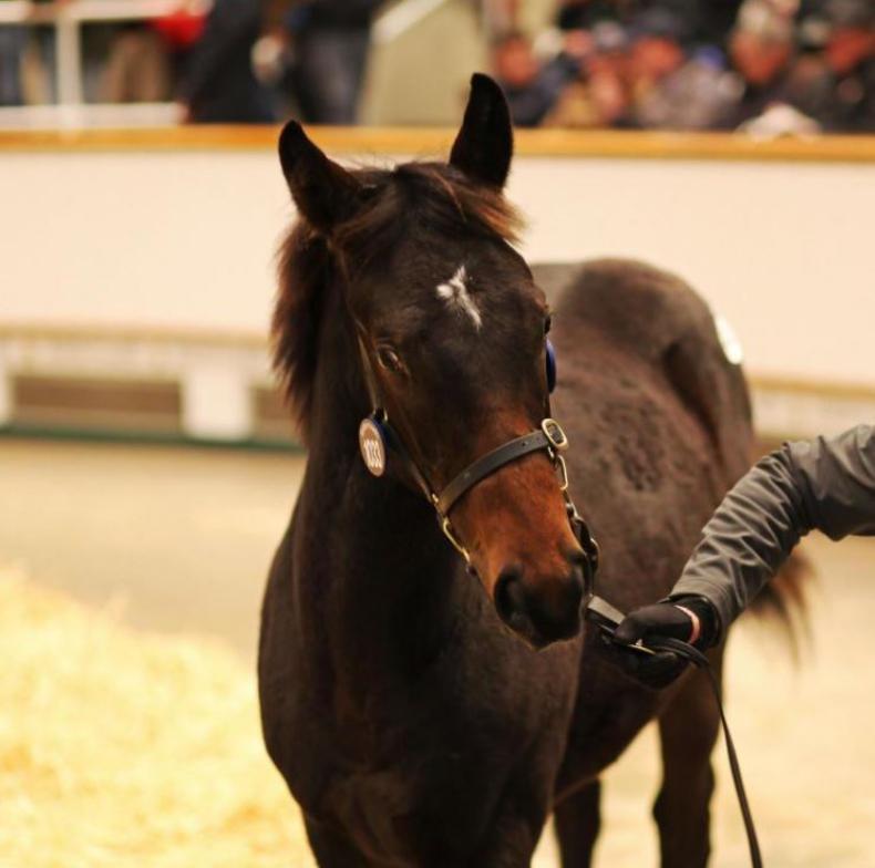 HORSE SENSE: Lights, camera, action