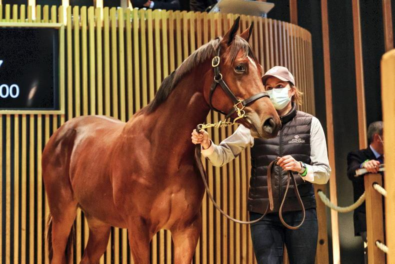 ARQANA OCTOBER YEARLING SALE: Son of Siyouni sets new October Sale record